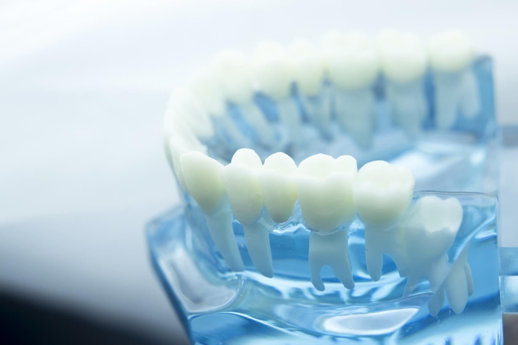Zähne und Gebiss